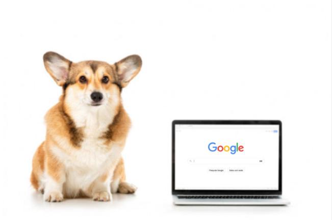 Cachorrinho ao lado de notebook